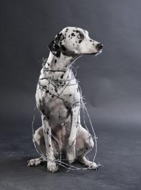 dog-1580549_640